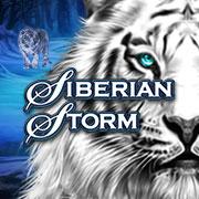 siberian-storm-sa